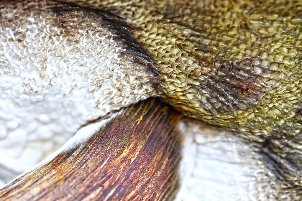 Texture of the Admirable Bolete (Boletus mirabili)