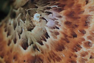 Mushroom closeup- Henry's Woods