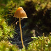 I found this wee 'shroom on an old tree that had been down for a long time.  Another time-sucking mushroom log, M! The light was fleeting, but the bg with the web was so great that I worked fast with that old OM 90mm. Probably f11.  It's about an inch tall.
