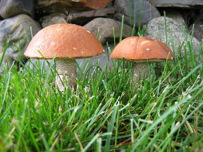 These were some mushrooms growing in our front yard