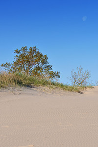 Typical dune habitat
