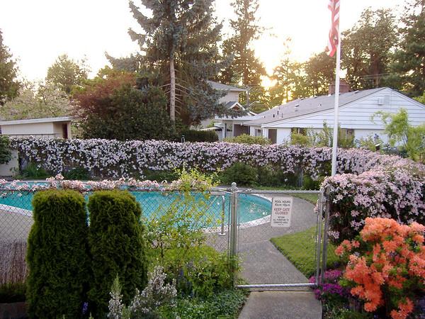 My Apartment's Garden
