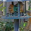 Funny looking bird in the bird feeder!!