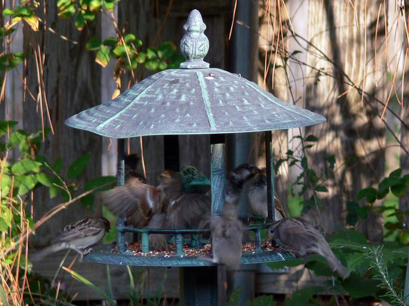 Bird eat bird !!