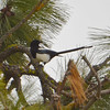 Magpie, Medical Lake, WA