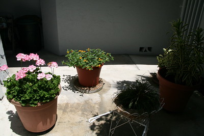 My Courtyard