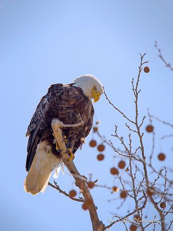 Eagle Bluff