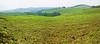 Untitled_Panorama1teafieldsnearKabale