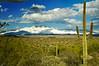 Arizona snow on the Four Peaks Mountains northeast of Mesa, AZ (ND70_2006-03-12DSC_3065-FourPeaksSnowSaguaro-nice-3.psd)