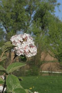 spring29