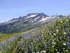 Lupine & Sitka Valerian in bloom. Indian Head Peak in the backgroud. August 2004.