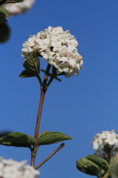 spring28
