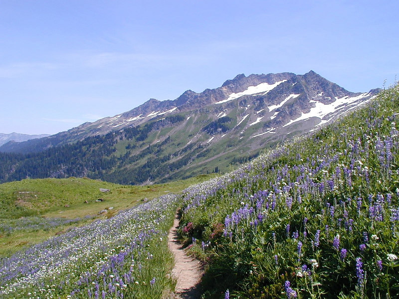 Lupine & Sitka Valerian in bloom. Indian Head Peak in the background. August 2004.