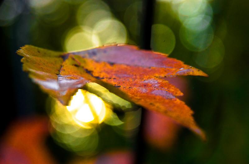 fall  morning in the garden