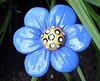 . . . more garden fun  (February 20, 2006)