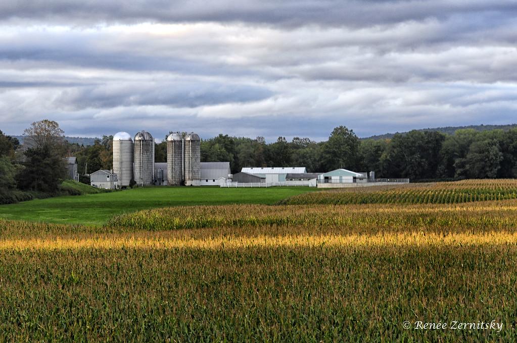 farm_DSC0173_edited-1