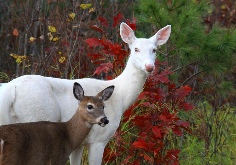 """""""Autumn Visitors"""""""