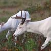 """"""" Be My Valentine""""  Wild albino deer of Boulder Junction Wisconsin"""