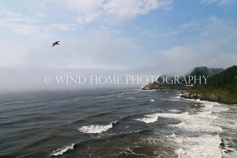 Heceta Head, Oregon Coast