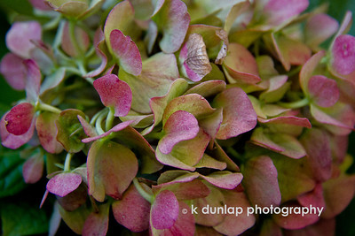 "Color Inspiration  ""How beautifully leaves grow old.  How full of light and color are their last days.""  John Burroughs."