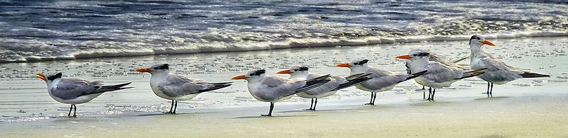 Gloria-Matyszyk-Birds-11-5-115 00