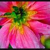 FotoSketcher - g_10152010_002  (Large)