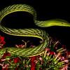 snake,