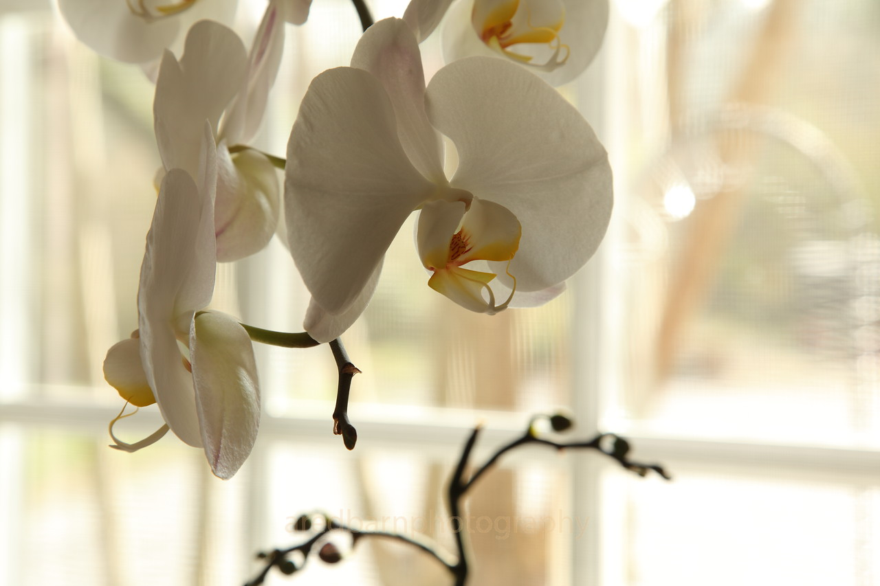 My wife loves her Orchids and many other flowers.