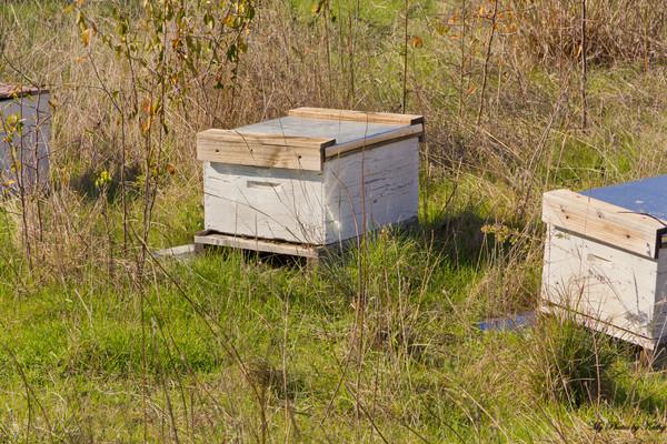Honeybee hive boxes