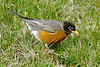 ROBIN 1606_filtered