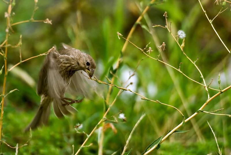 HOVERING BIRD 9755