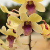 FLOWERS & TREES  Yellow Orchid