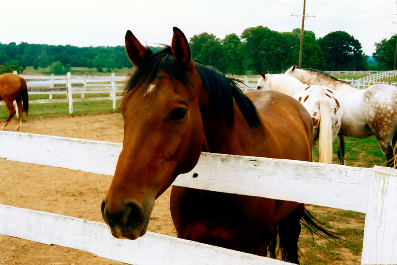 FRIENDLY HORSE_filtered