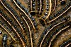 NORTHEASTERN TENT CATERPILLARS  2403_filtered