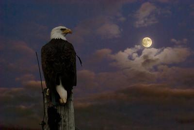 EAGLE'S MOON