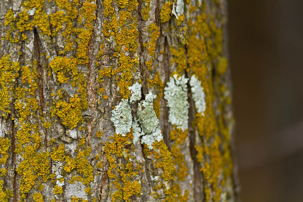 Fungus on the bark of a tree