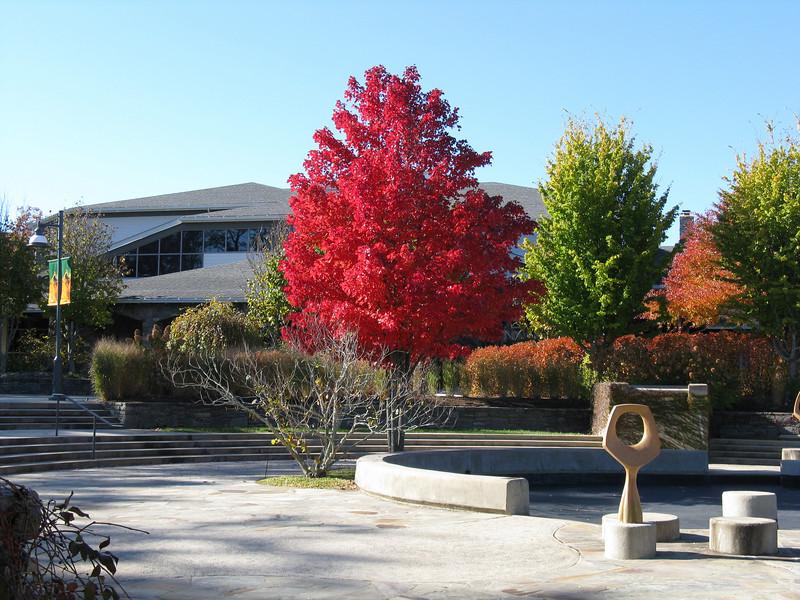 NC State Arboretum Nov 1, 2008