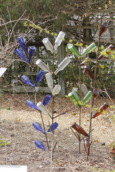 each bottle tree shows the various ways leaves grow on plants