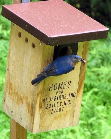 NC Wildlife Photo Contest 2009