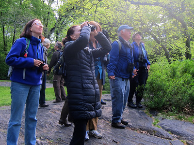 NYC Audubon Bird Walks Spring 2013