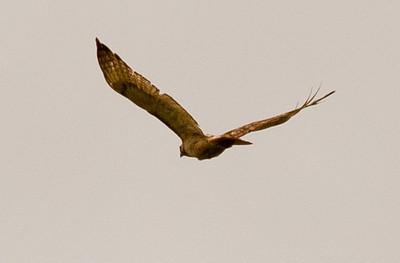 Nantucket Hawks 2011