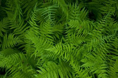 Nantucket Hidden Forest