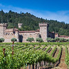 Castello vineyard