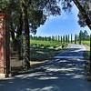 Napa area- Castello Di Amarosa vineyard