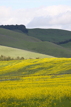 Napa Valley Spring 2009