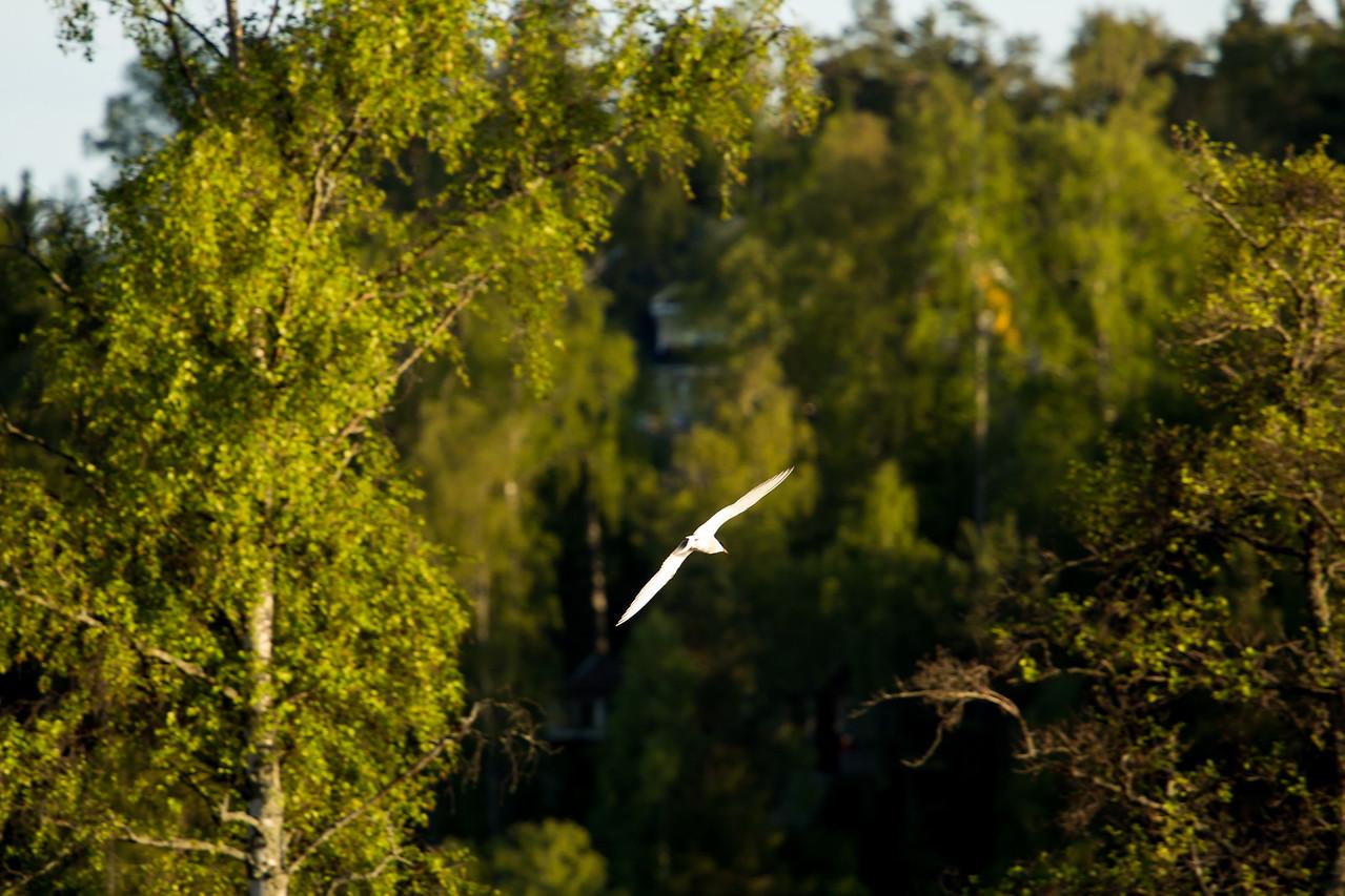 Näsuddens naturreservat