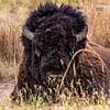 National Bison Range 8-25-2020_V9A8727