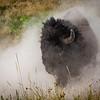 National Bison Range 8-25-2020_V9A8694