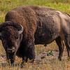 National Bison Range 8-25-2020_V9A8684