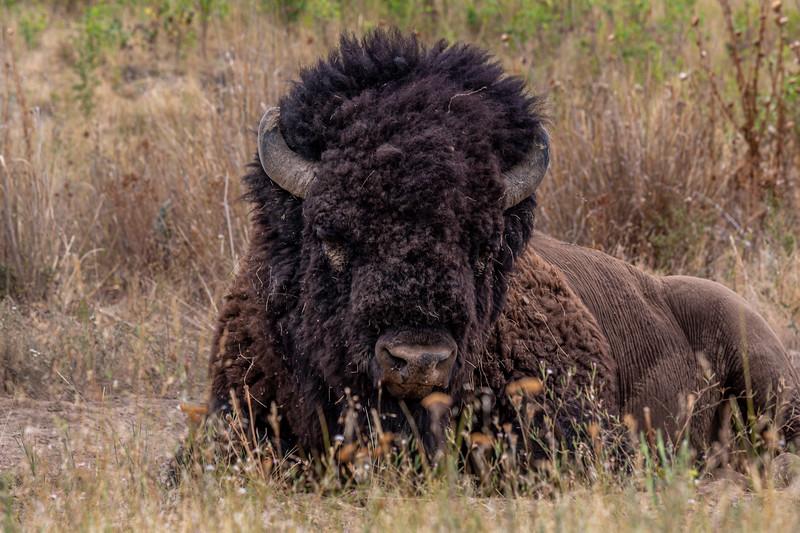 National Bison Range 8-24-2020_V9A8724